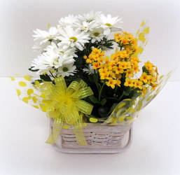 Hello Spring from Lesher's Flowers, local St. Louis Florist since 1973