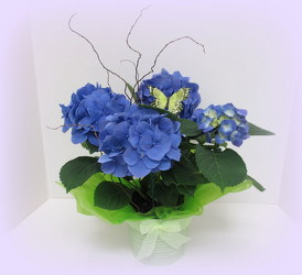 Hydrangea from Lesher's Flowers, local St. Louis Florist since 1973