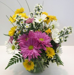 Happy Daysies! from Lesher's Flowers, local St. Louis Florist since 1973