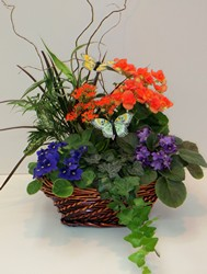 Enchanted Garden Basket from Lesher's Flowers, local St. Louis Florist since 1973