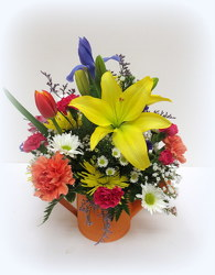 Just Add Water from Lesher's Flowers, local St. Louis Florist since 1973