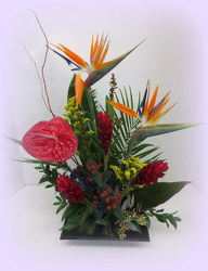 Tropical Thoughts from Lesher's Flowers, local St. Louis Florist since 1973