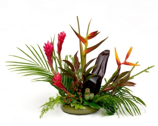 Tropical Delight from Lesher's Flowers, local St. Louis Florist since 1973