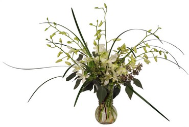 Elegant Orchids from Lesher's Flowers, local St. Louis Florist since 1973